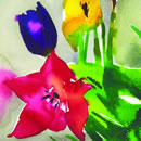 A series of floral subjects using watercolour inks to intensify nature's colours. The paintings have also been adapted as greetings cards.